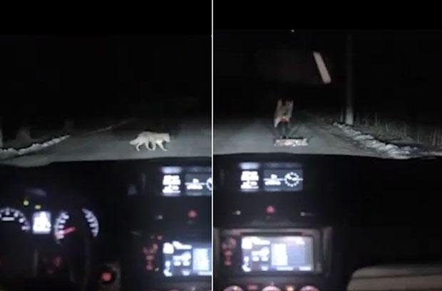 El comercial de un auto que protagonizan una mujer y un perro con un final inesperado