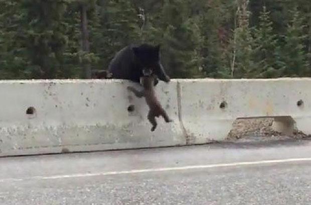 """El emotivo rescate de una """"mamá oso"""" a su hijo en medio de la autopista"""