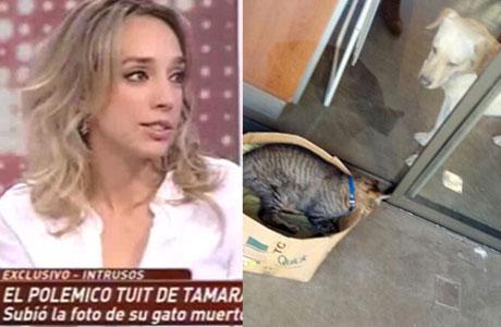 Tamara Pettinato, sobre la repercusión de la foto de su gato muerto: