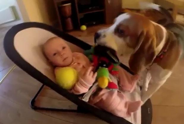 """Un perro le """"robó"""" un juguete a una beba pero no aguantó la culpa"""