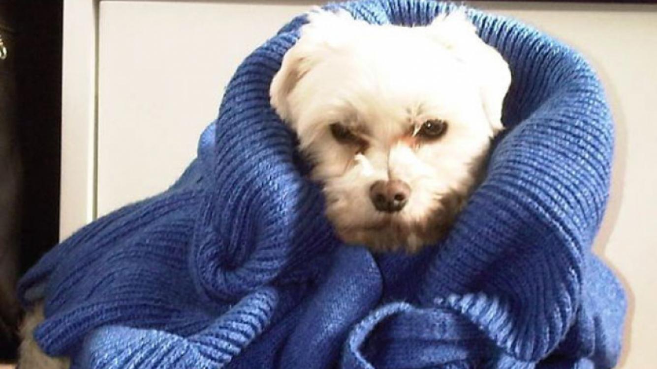 La actriz publicó una imágen de su mascota en plena sesión de fotos (Foto: Twitter).