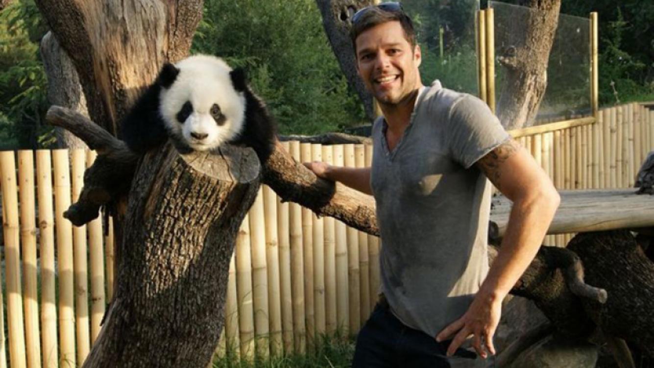 Ricky Martin, feliz en el zoológico de Madrid. (Foto: @ricky_martin)