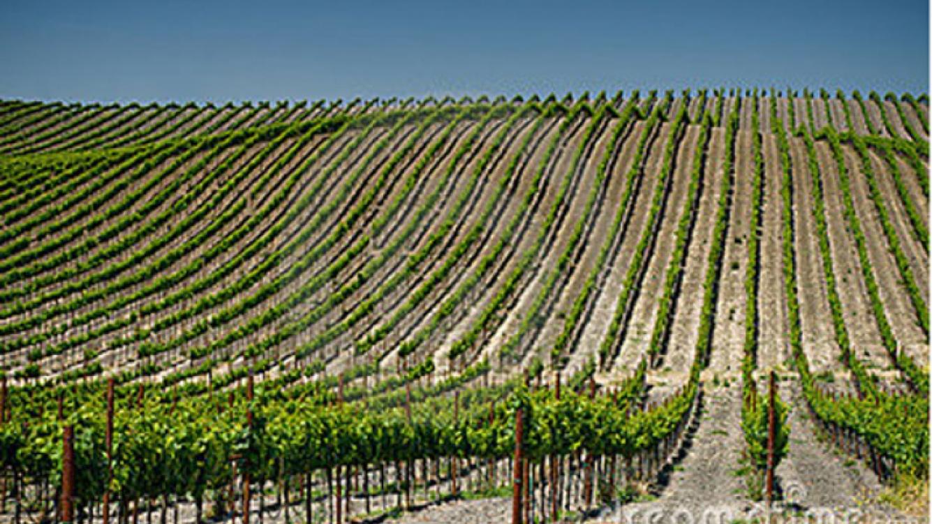 Una vista de los viñedos de Napa, EE.UU. (Foto: dreamstime.com)