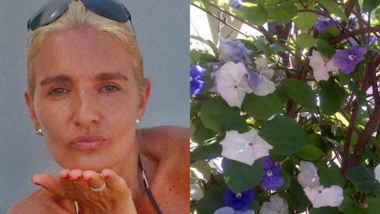 Silvia D´Auro subió una foto de unas flores de su jardín y una frase para sus hijas (Foto: Web y Twitter).