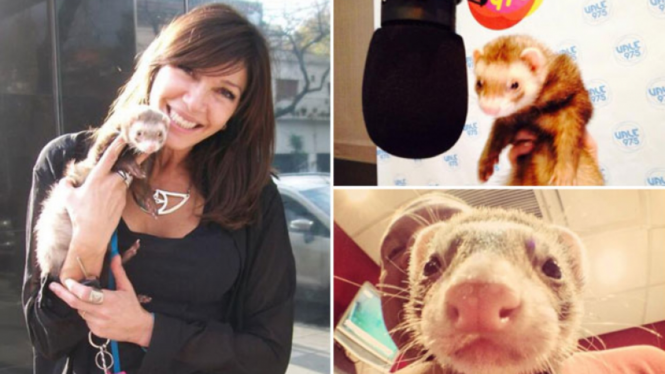 Catherine Fulop llevó a su hurón a la radio… ¡y se escapó del estudio! (Foto: Twitter)