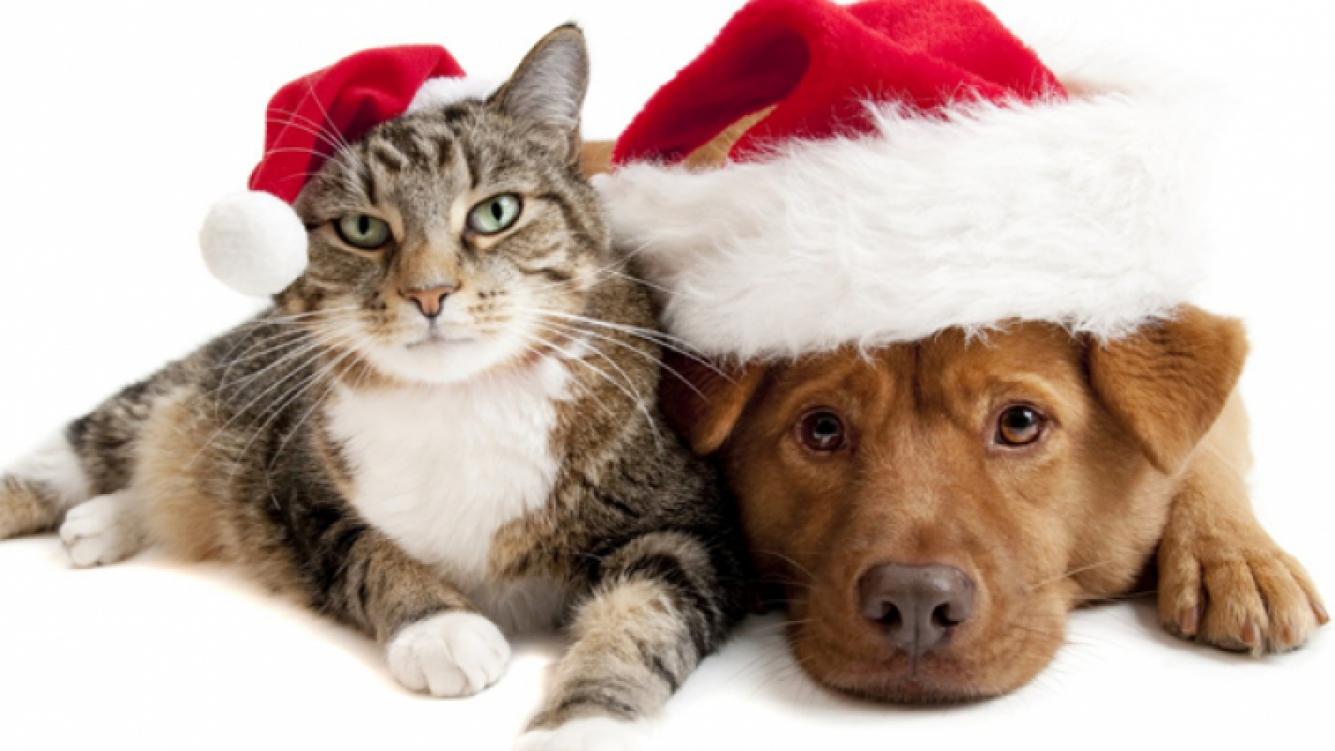 Consejos para proteger a las mascotas de la pirotecnia. (Imagen: web)