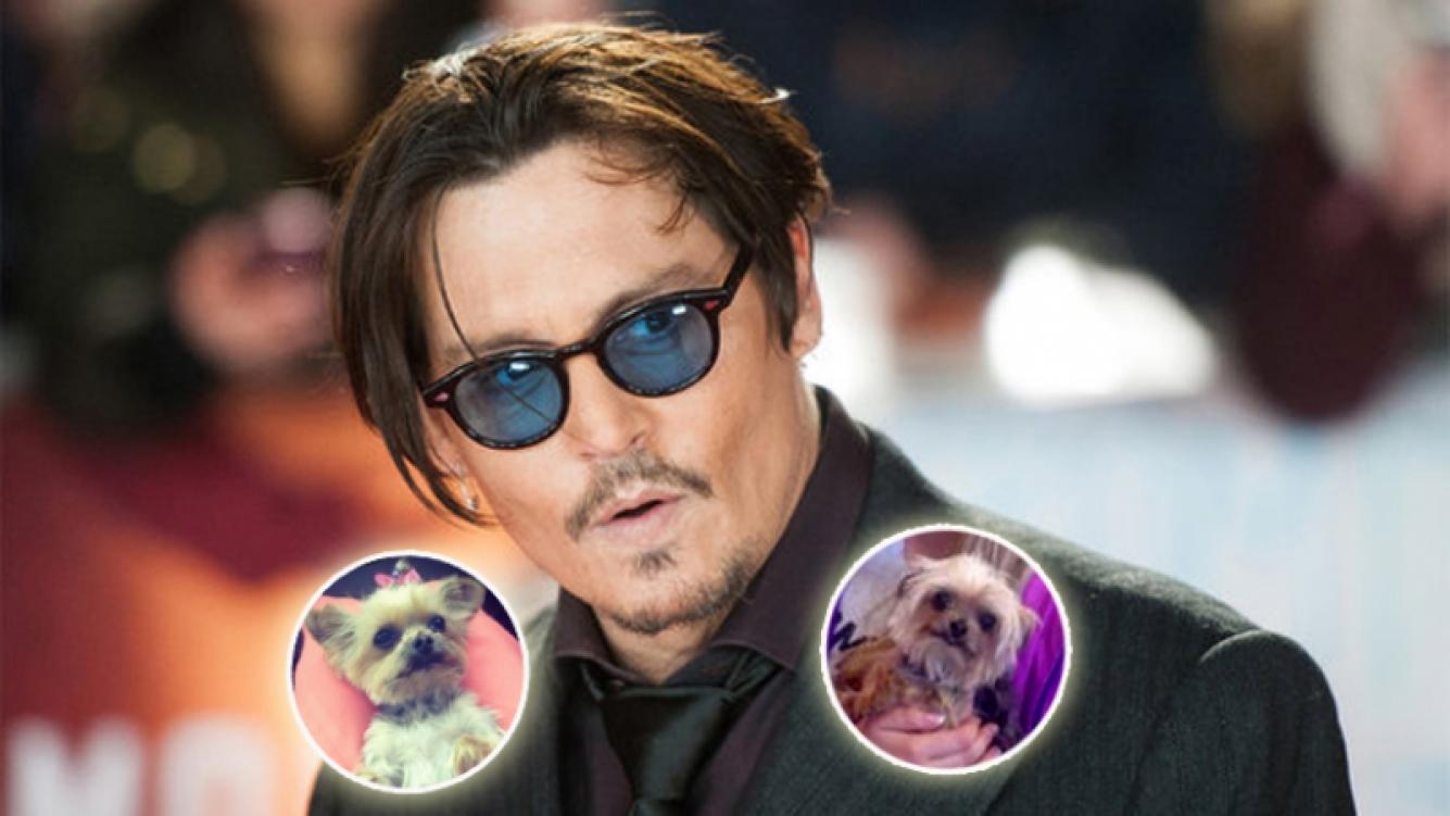 Australia amenaza con sacrificar a los perros de Johnny Depp. (Foto: Web)