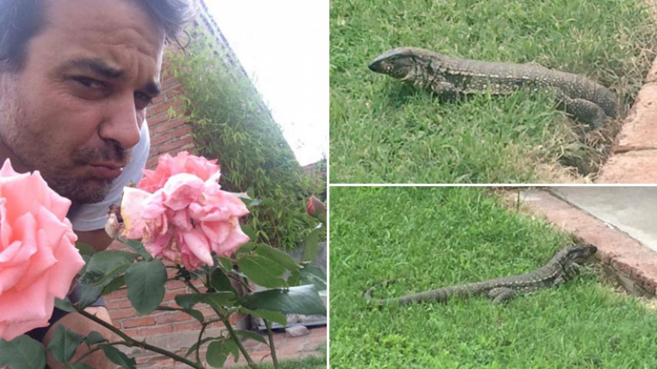 Pedro Alfonso y una sorpresiva visita animal en su jardín de Carlos Paz. (Foto: Twitter)