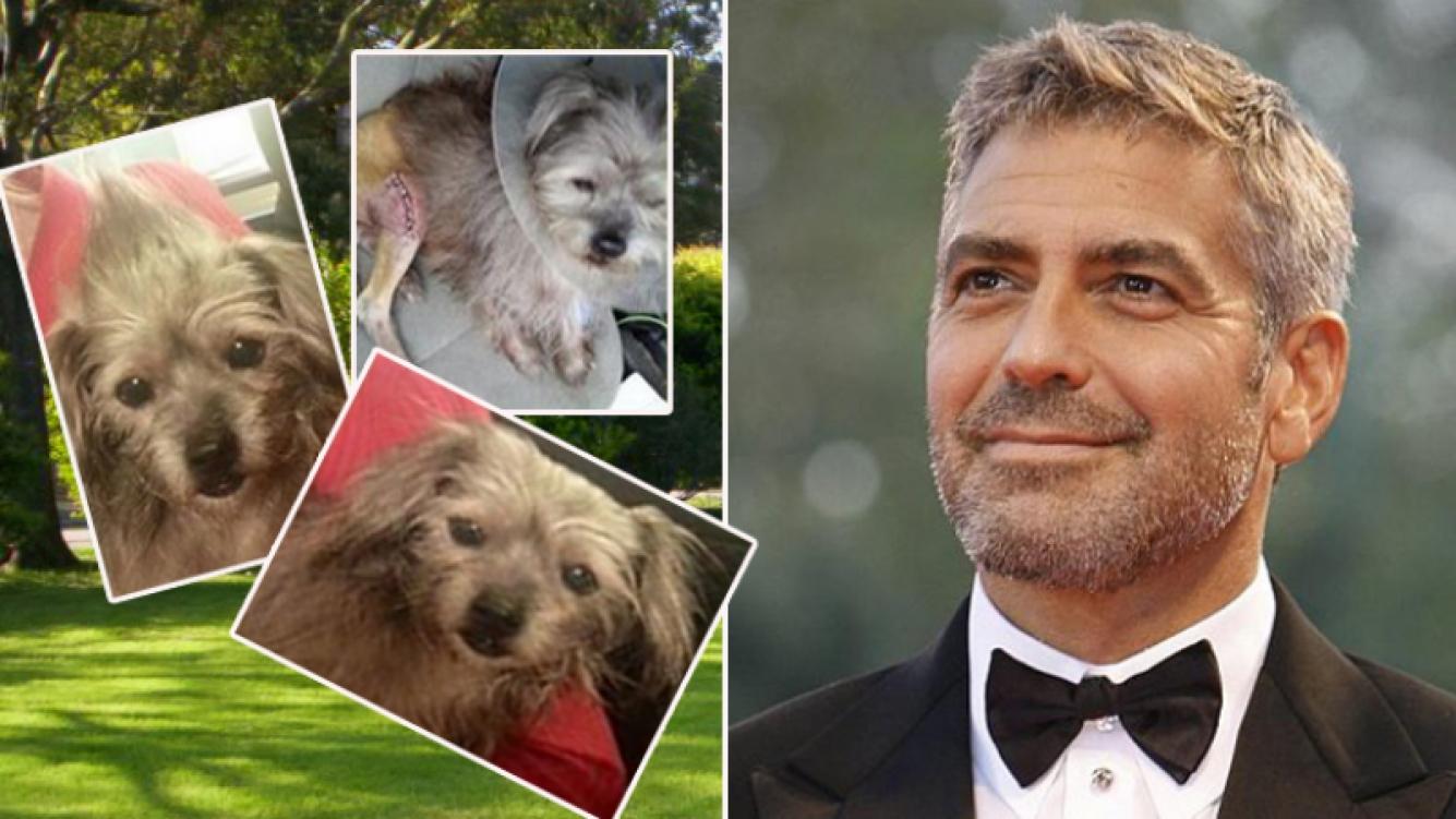 George Clooney adoptó al dulce Nate. Fotos: Facebook y Web.