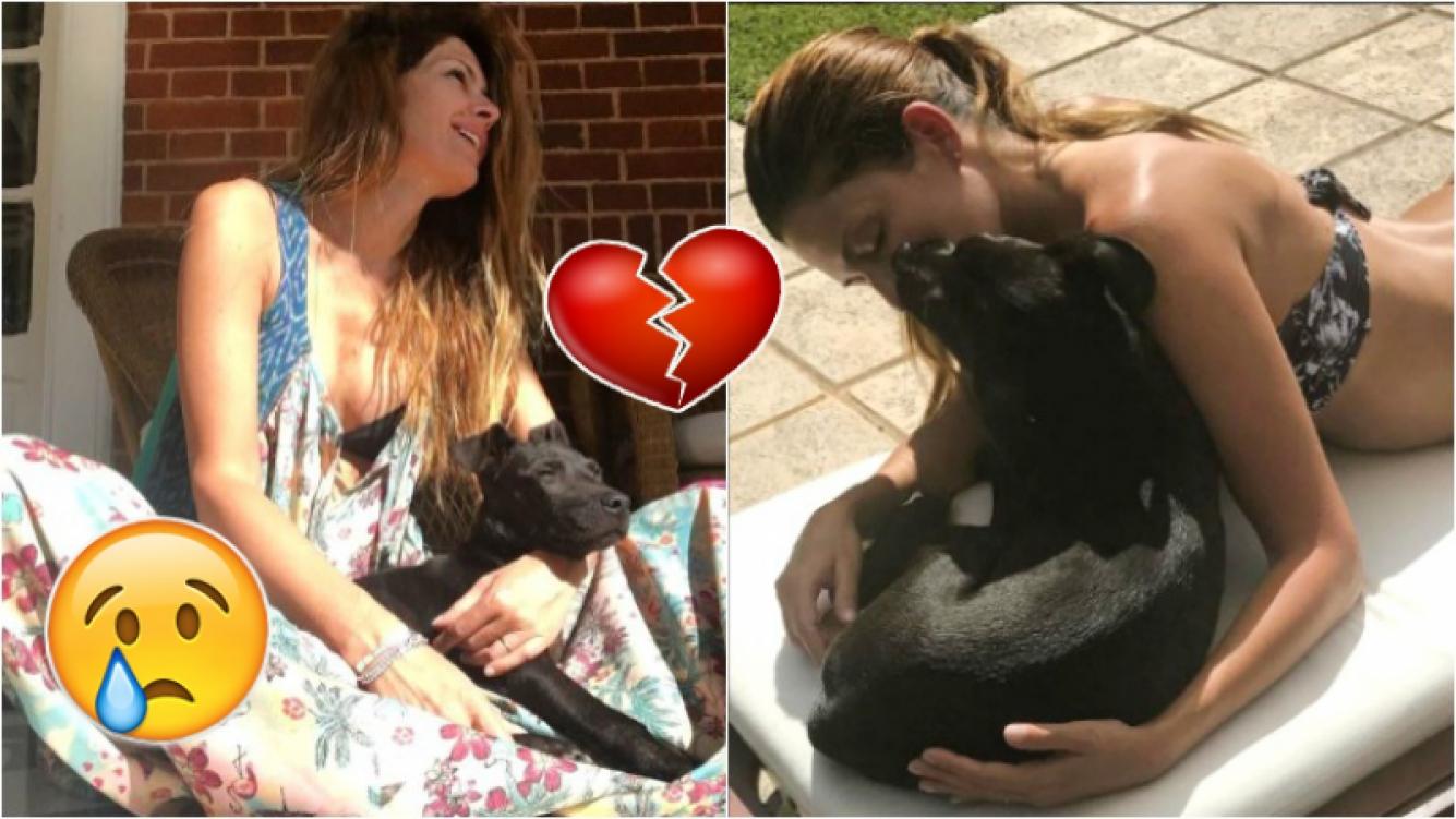 La tristeza de Isabel Macedo por la muerte de la perrita que rescató. Foto: Instagram