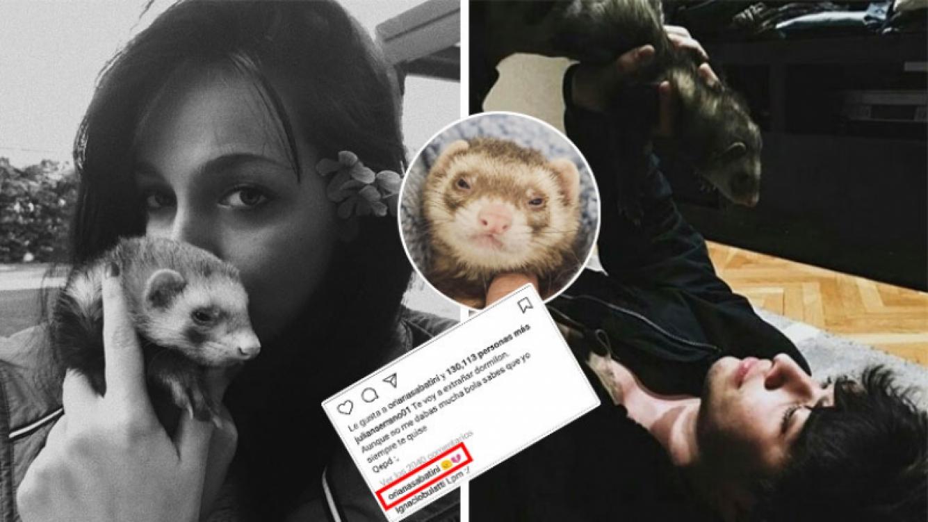 Oriana Sabatini y Julián Serrano se despidieron de Coco, el hurón que tuvieron como mascota. (Foto: Instagram)