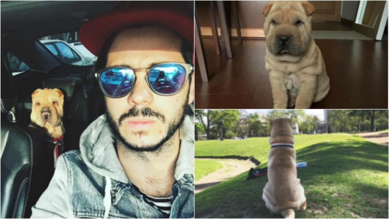 """La tristeza de Nicolás Magaldi por la muerte de Randal, su perro: """"Gracias por cambiarnos la vida"""" Foto: Instagram"""