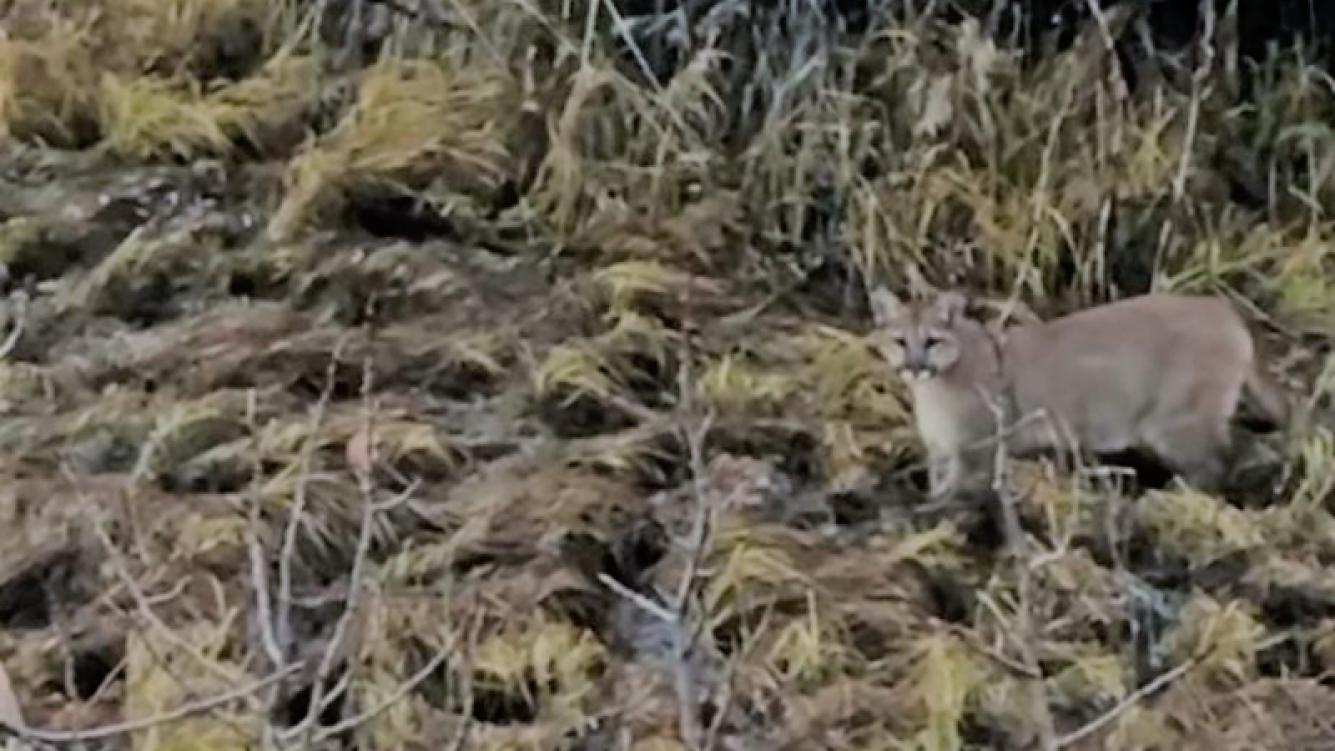 El hambriento felino se encontró con la sorpresa de su vida