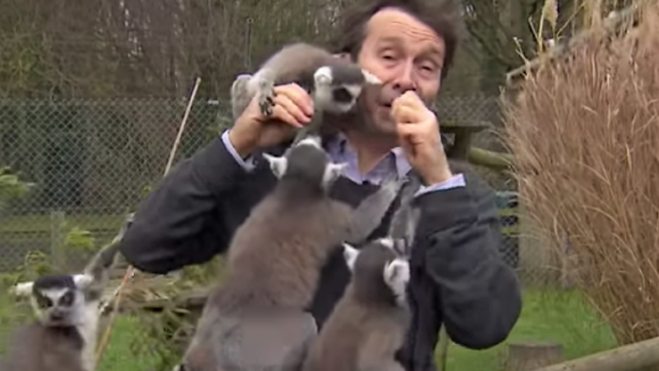 """Ataque"" de lémures a reportero británico quedó grabado en video"