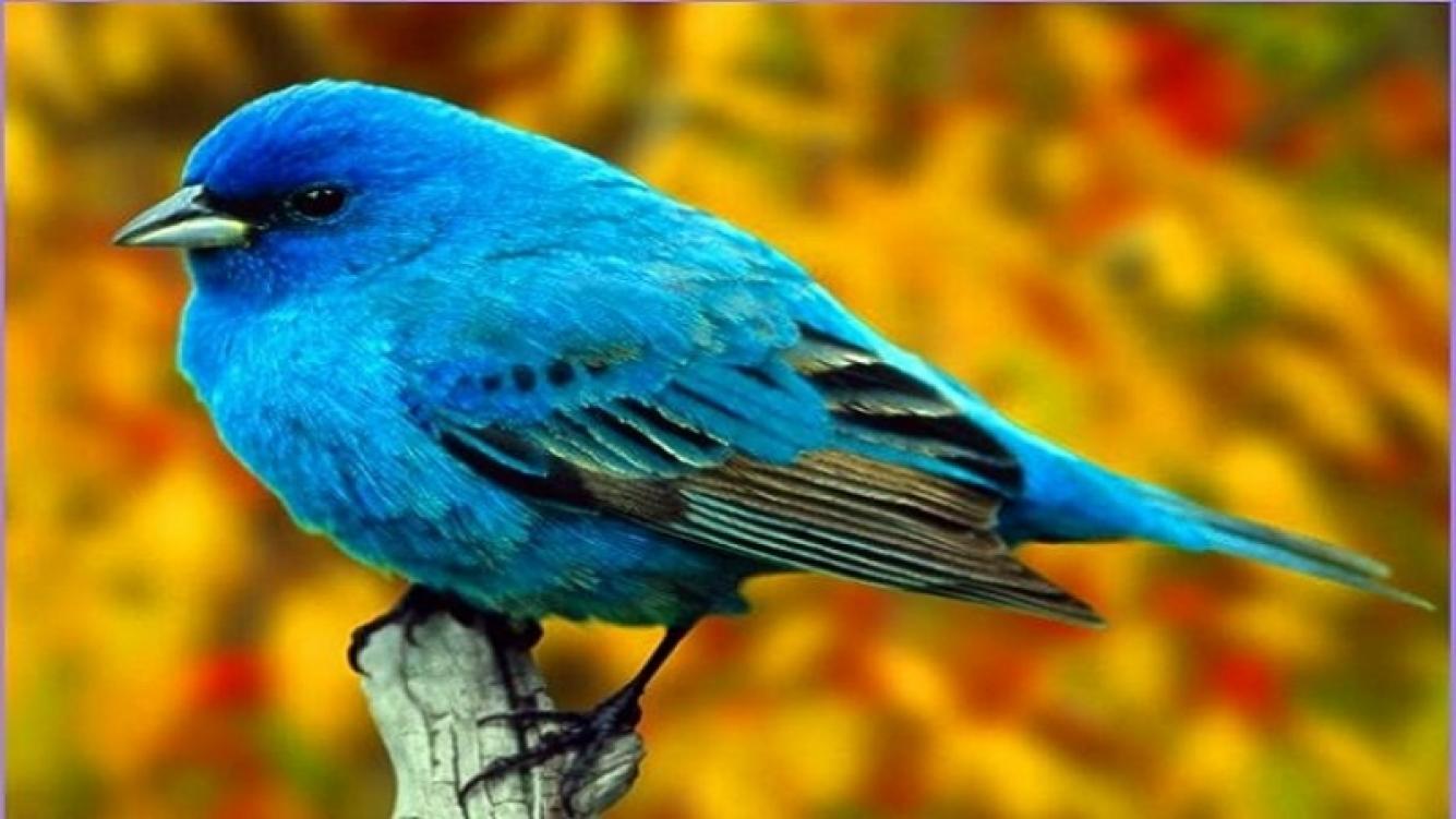 El canto de las aves tiene información del clima