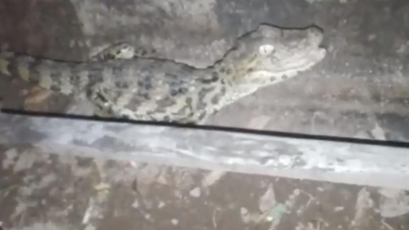 Escuchó ruidos en su casa y al salir al patio se llevó una gran sorpresa