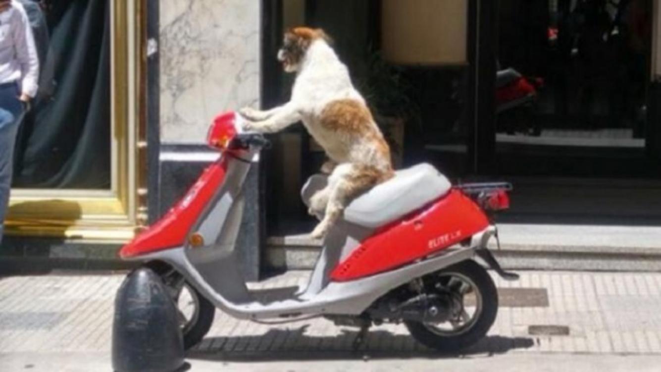 Un perro en moto causó sensación en Buenos Aires