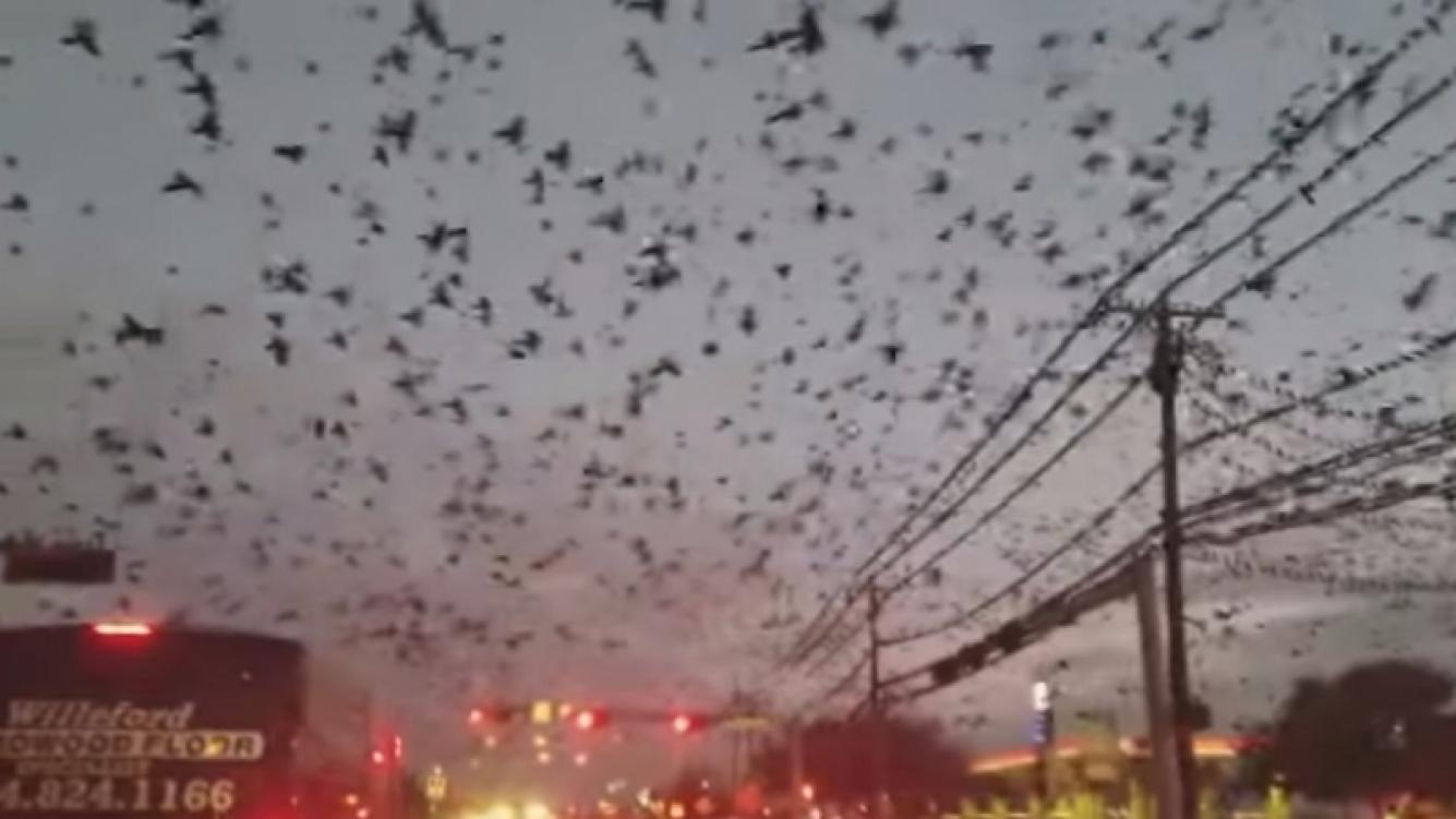 Una gran cantidad de pájaros causó asombro en Texas