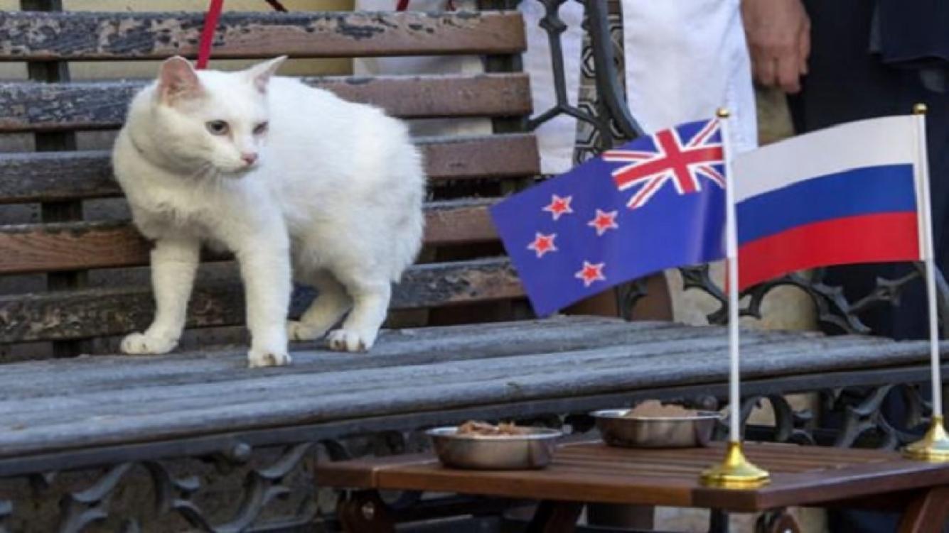 Un gato sordo, el sucesor del pulpo Paul para Rusia 2018