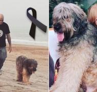 La dolorosa despedida de Denise Dumas a su perro Santiago