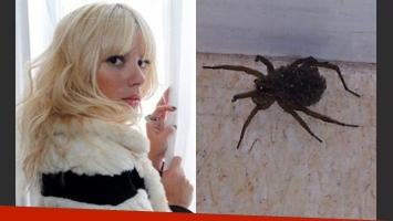 Gimena Accardi publicó una foto de la araña que encontró en el camarín (Fotos: Web y Twitter).