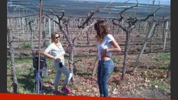 Silvina Luna parodió su video prohibido en los viñedos de Mendoza. Gladys Florimonte tomó nota. (Foto: @mmatiasale)
