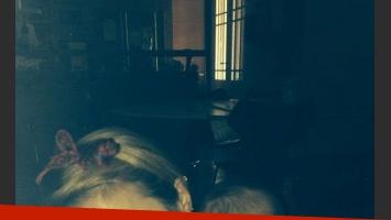Chechu Bonelli y la bella Lupe, juntas en la web (Foto: Twitter).