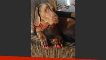 Thelma, la perra de Susana, con sus uñas postizas (Foto: Twitter).