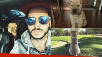 La tristeza de Nicolás Magaldi por la muerte de Randal, su perro: