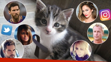 Los mensajes de dolor de los famosos por el atentado terrorista en Barcelona: el particular motivo por el que se postean fotos de gatitos