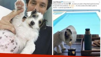Pico Mónaco junto a su perro Osvaldo, contra la pirotecnia: Lo único que le pidió a Papá Noel es que no tiren