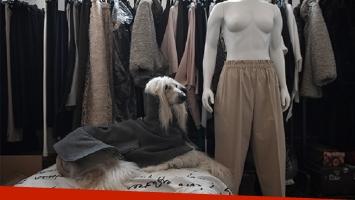 Modista italiana crea ropa de lujo y a la medida para perros