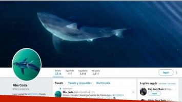 Un tiburón blanco tiene cuenta de Twitter