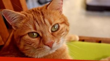 Un gato heredó la fortuna en euros que tenía su dueña