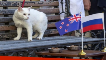 Un gato será el encargado de predecir los resultados de Rusia 2018