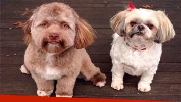 Un perro con cara de humano sorprende en las redes sociales