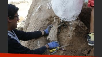 Encontraron un perezoso gigante de más de tres millones de años en Mar del Plata
