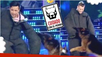 La nueva prueba con perros en Canta si puedes (Fotos: Captura)