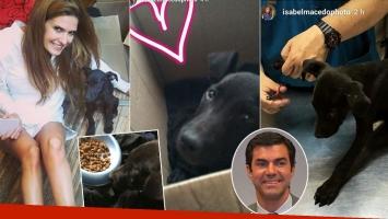 Isabel Macedo rescató a una perrita de la calle (Fotos: Instagram)