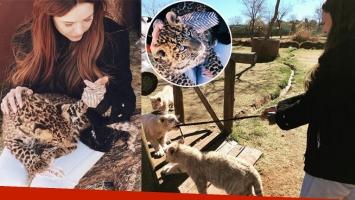 Candelaria Tinelli, de viaje por Sudáfrica junto a leopardos y tigres. (Foto: Instagram)