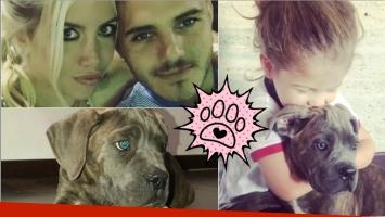 Wanda Nara y Mauro Icardi presentaron a su nuevo perro con un tierno video junto a Francesca: