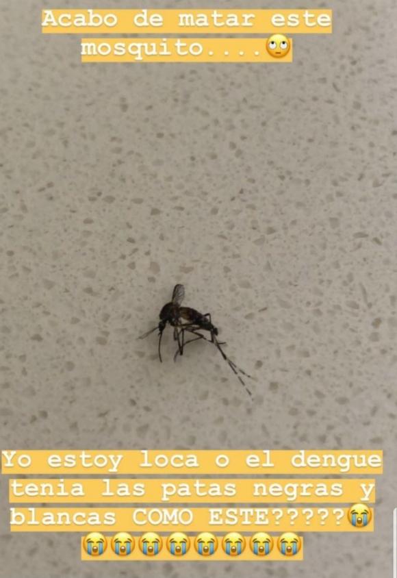"Paula Chaves mató a un mosquito y pensó que era el que transmite dengue: ""Soy ese tipo de madres no relajadas"""